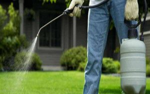 Tips for fumigating: Type of fumigation the garden