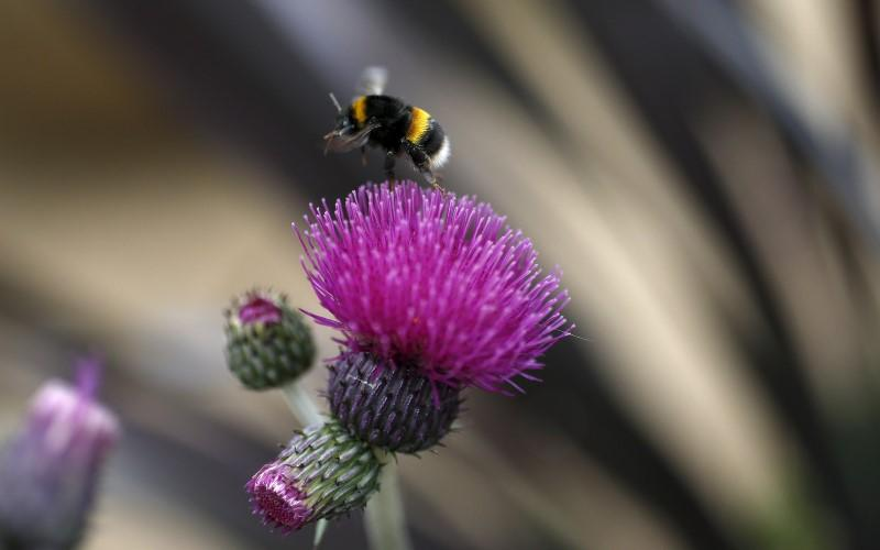 Plants and flowers that attract bees