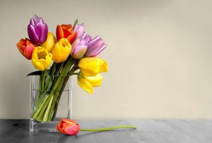 How to grow tulips in water?