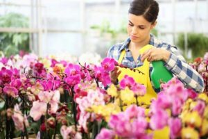 How to plant orchids? Step by step guideline