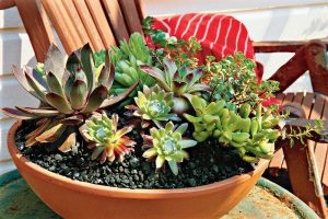 How to plant succulents with seeds and leaves?