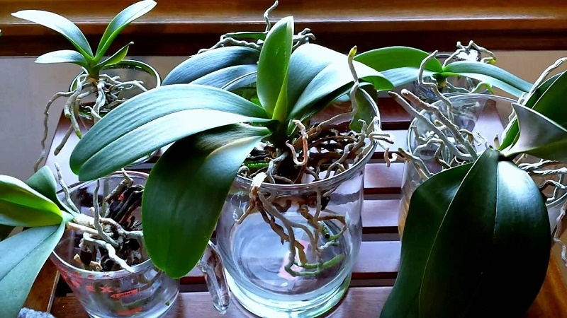 How to water the orchids