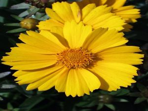 Plants and flowers of yellow color to decorate your exteriors and interiors
