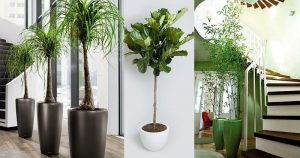 5 large indoor plants to increase the beauty of interior