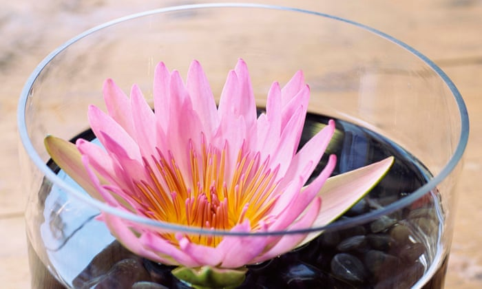 How to grow water lilies in a bowl