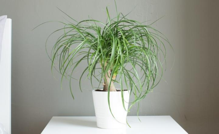 How to care for palm plants