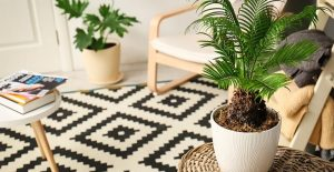 How to care for palm plants inside your house? (3 necessary steps)