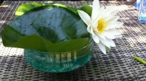 How to grow water lilies in a bowl? Step by step guideline