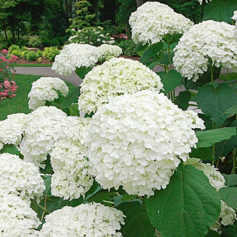 10 white flowers for garden