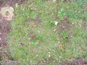 Five common lawn problems and how to fix them