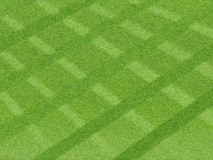 7 tips for a perfect lawn