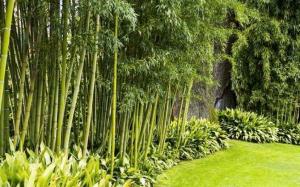 Bamboo garden- How to grow bamboo in the garden