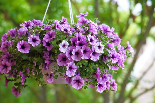 outdoor hanging plants