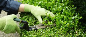 8 basic garden maintenance tips