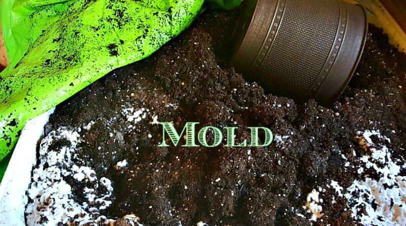 white mold in garden soil