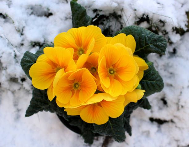 cold weather flowers