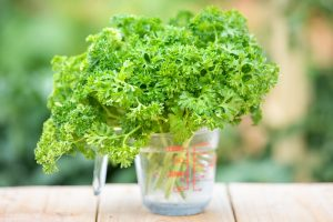 How to harvest parsley in the garden or in a pot