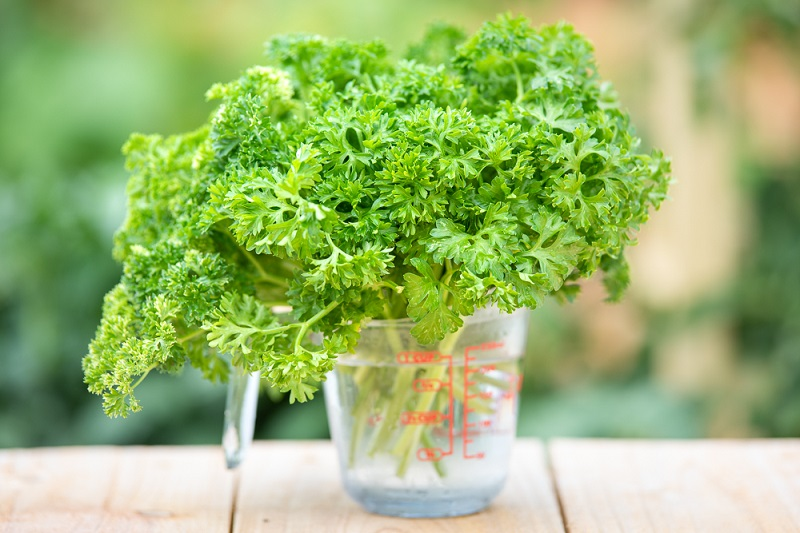 How to harvest parsley in the garden